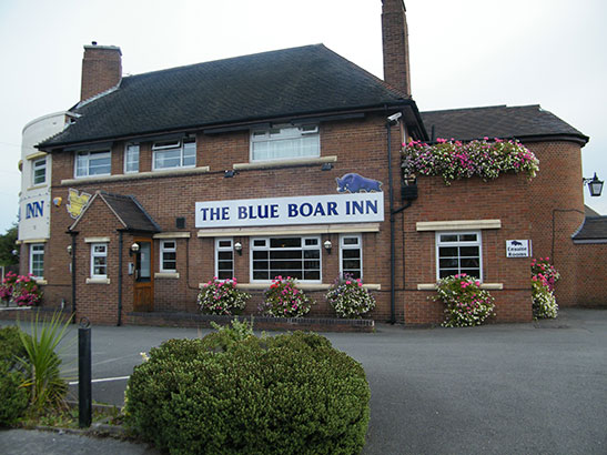 blue-boar